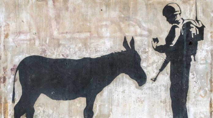 Donkey's documents Banksy